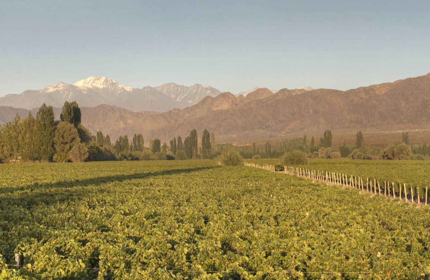 Cheval Des Andes Andes Grand Cru Wines Spirits Lvmh